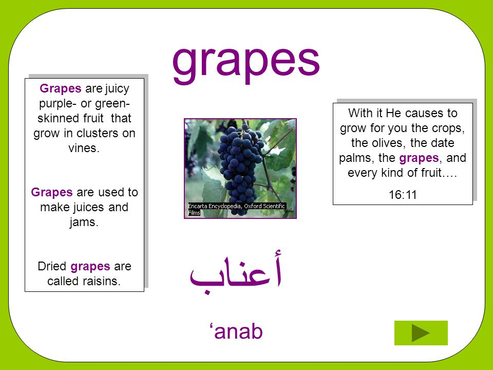 grapes ﺃﻋﻨﺎﺐ 'anab With it He causes to grow for you the crops, the olives, the date palms, the grapes, and every kind of fruit….