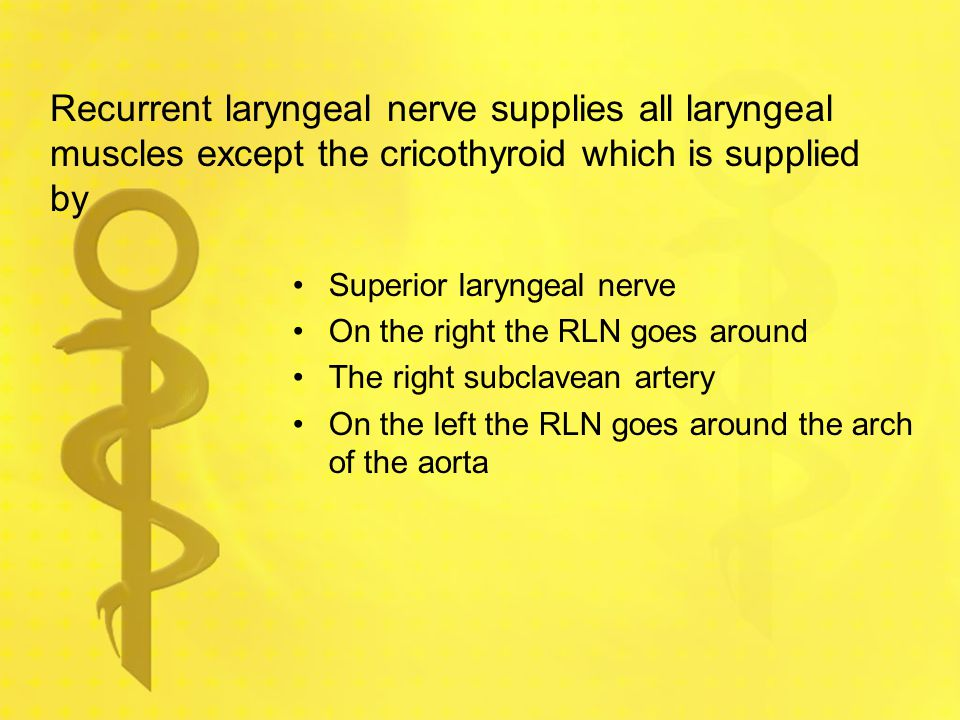 Recurrent laryngeal nerve supplies all laryngeal muscles except the cricothyroid which is supplied by Superior laryngeal nerve On the right the RLN go