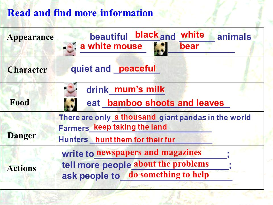 Paragraph 1 Paragraph 2 Paragraph 3 Paragraph 4 Paragraph 5 Appearance and character Food Babies Danger Actions Read and match the main idea of each paragraph: Report : Giant pandas are in danger