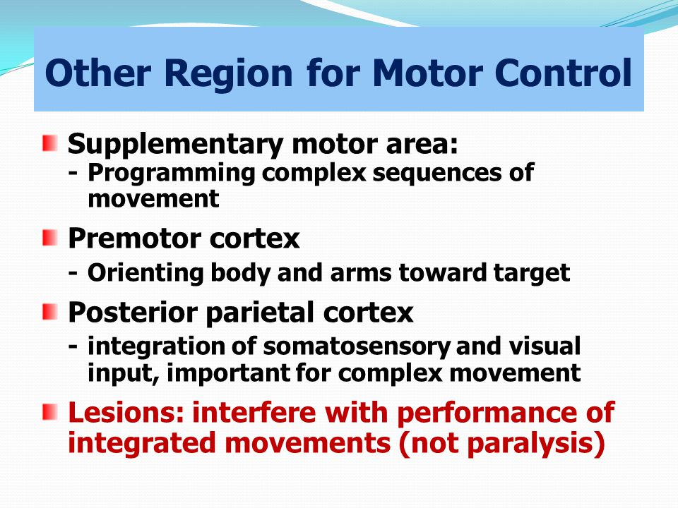 Other Region for Motor Control Supplementary motor area: -Programming complex sequences of movement Premotor cortex -Orienting body and arms toward target Posterior parietal cortex -integration of somatosensory and visual input, important for complex movement Lesions: interfere with performance of integrated movements (not paralysis)