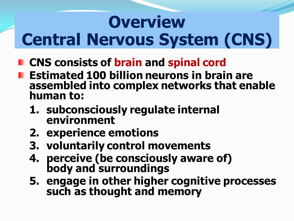 Overview Central Nervous System (CNS) CNS consists of brain and spinal cord Estimated 100 billion neurons in brain are assembled into complex networks that enable human to: 1.