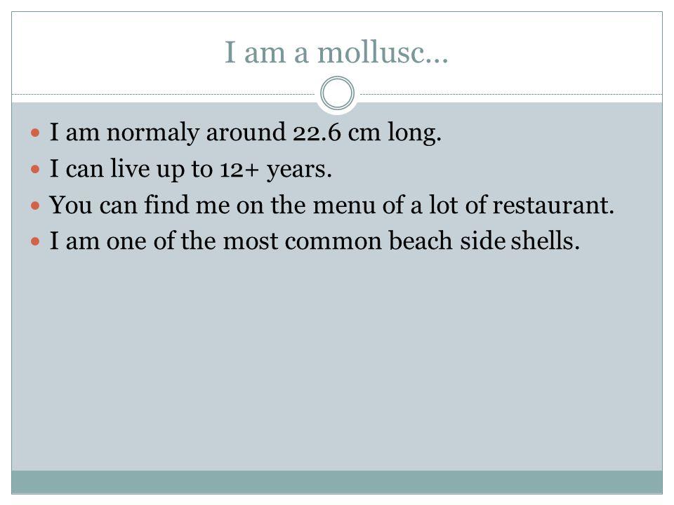 I am a mollusc… I eat clams and other molluscs.