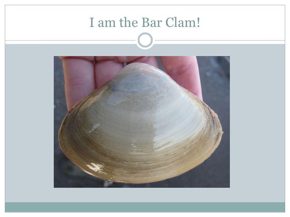 I am the Bar Clam!