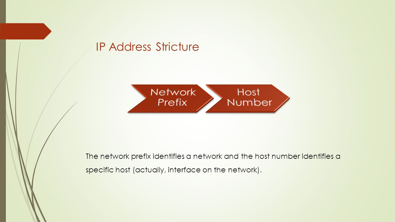 IP Address Stricture The network prefix identifies a network and the host number identifies a specific host (actually, interface on the network).