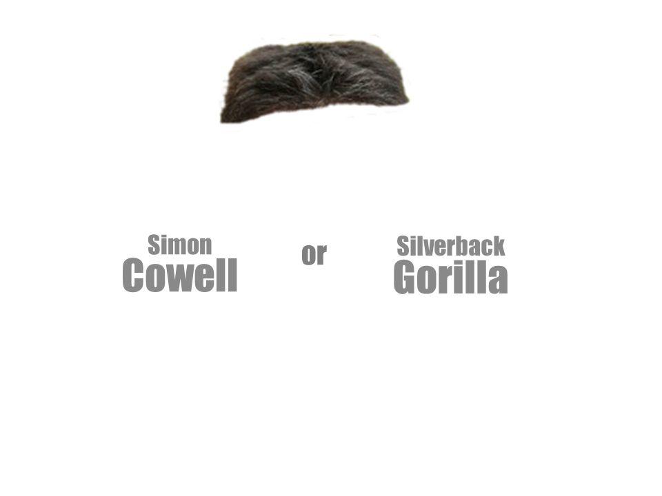 Silverback Gorilla Simon Cowell or