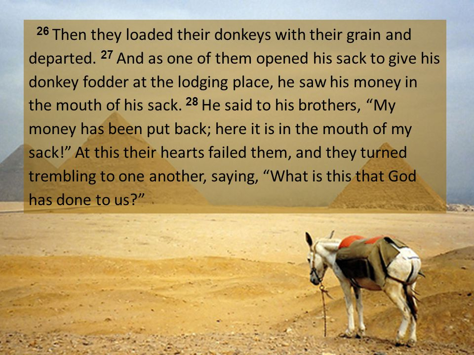 26 Then they loaded their donkeys with their grain and departed.