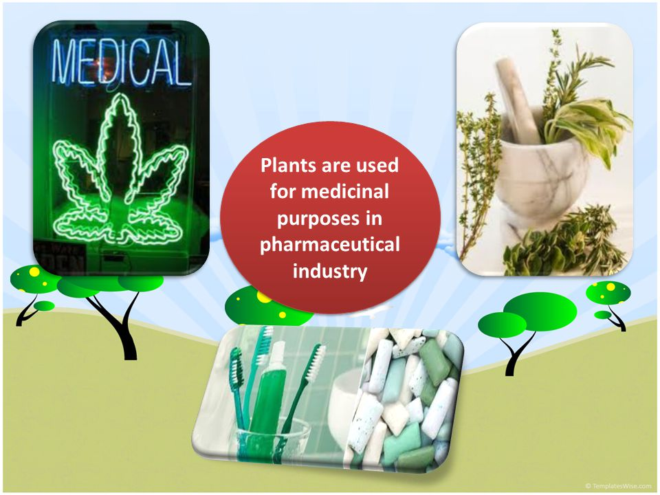 Plants are used for medicinal purposes in pharmaceutical industry