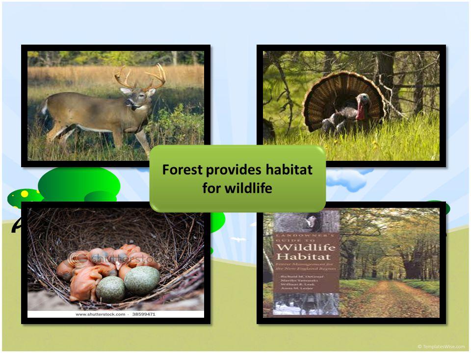 Forest provides habitat for wildlife