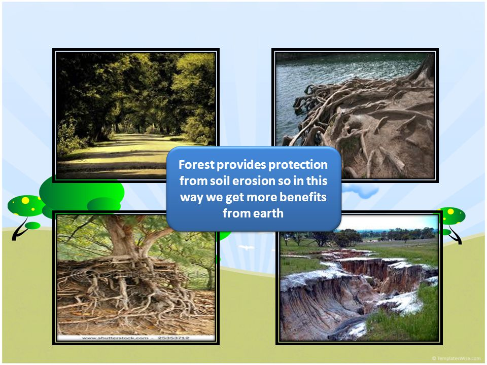 Forest provides protection from soil erosion so in this way we get more benefits from earth