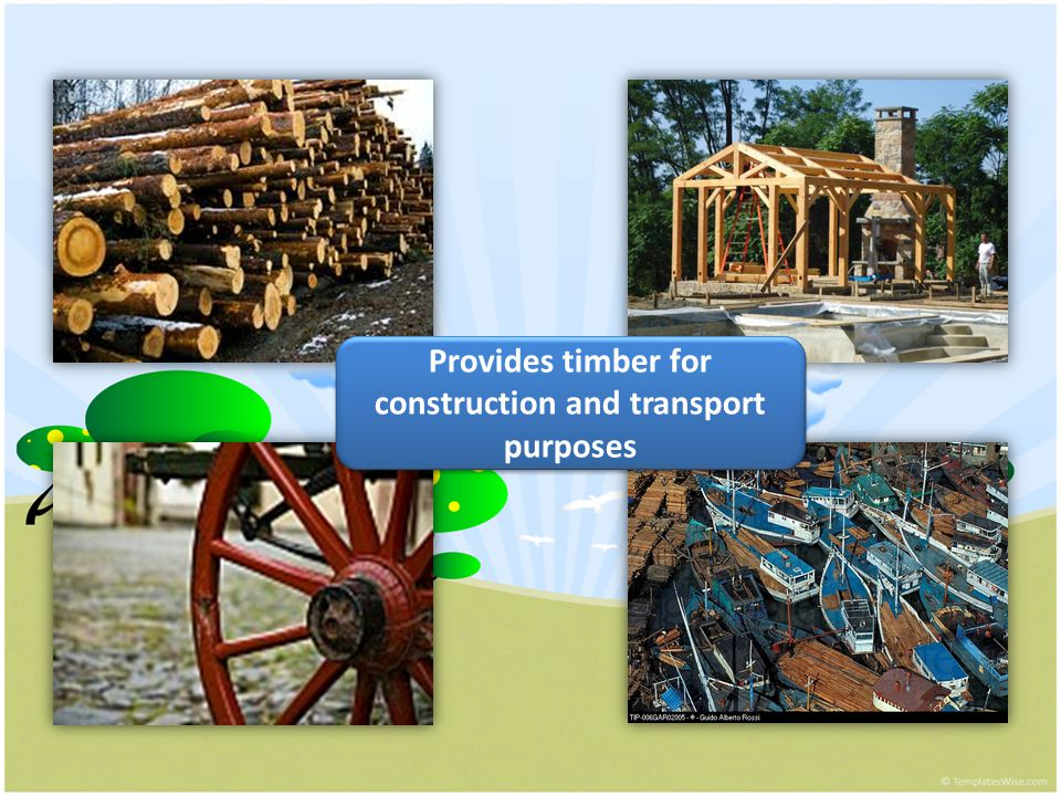 Provides timber for construction and transport purposes Provides timber for construction and transport purposes