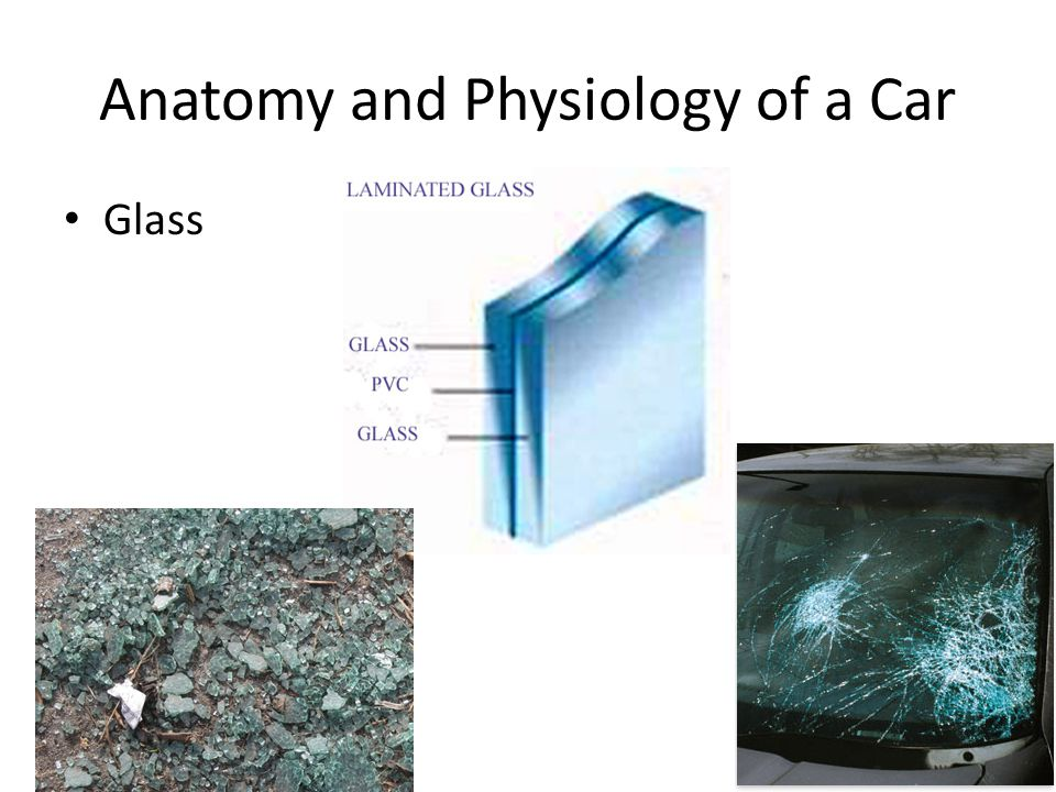 Anatomy and Physiology of a Car Glass