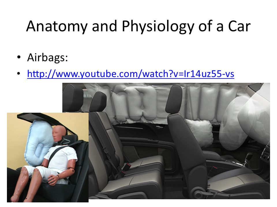 Anatomy and Physiology of a Car Airbags:   v=Ir14uz55-vs