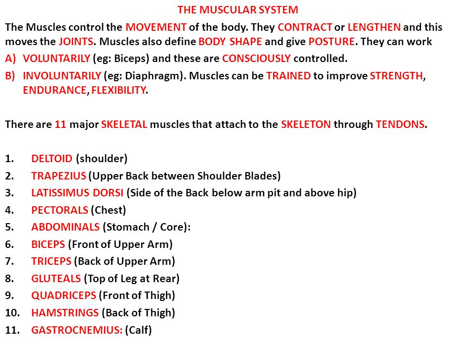 THE MUSCULAR SYSTEM The Muscles control the MOVEMENT of the body. They CONTRACT or LENGTHEN and this moves the JOINTS. Muscles also define BODY SHAPE