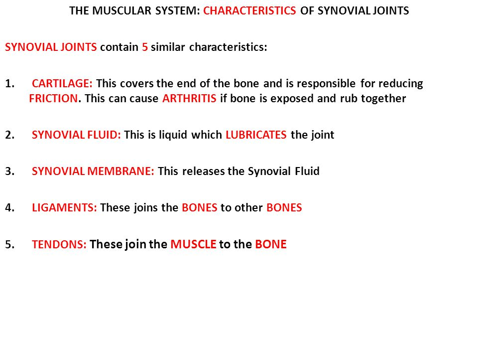 THE MUSCULAR SYSTEM: CHARACTERISTICS OF SYNOVIAL JOINTS SYNOVIAL JOINTS contain 5 similar characteristics: 1. CARTILAGE: This covers the end of the bo