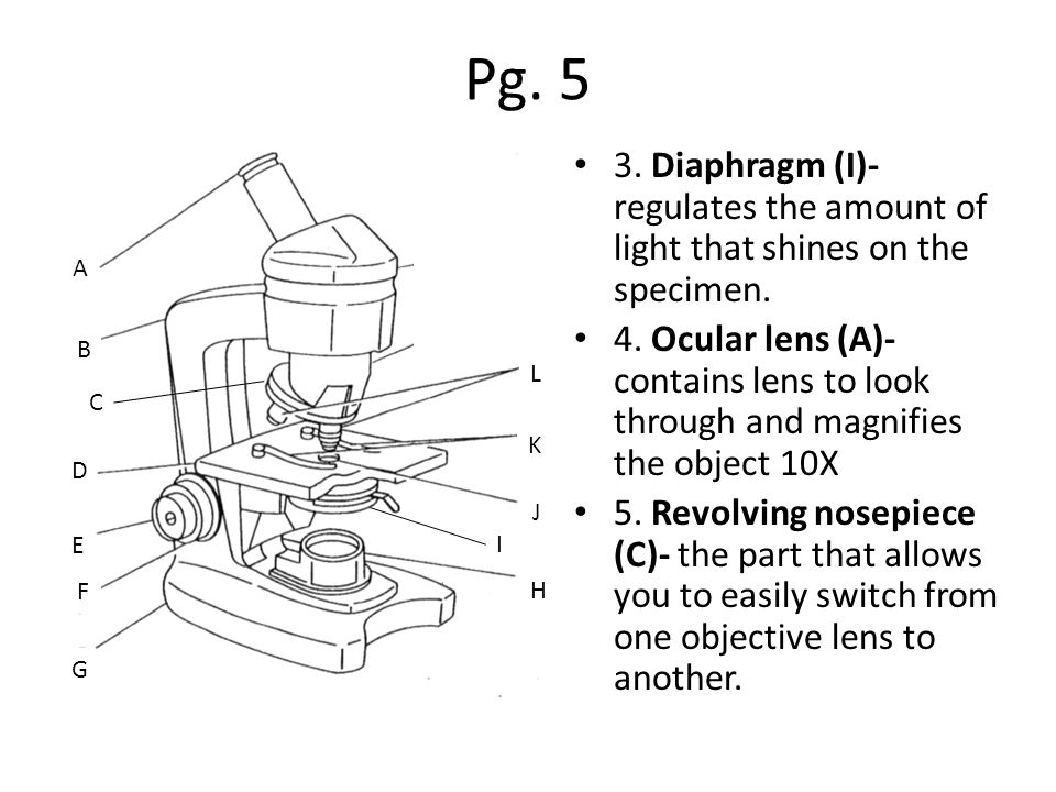 Pg Diaphragm (I)- regulates the amount of light that shines on the specimen.