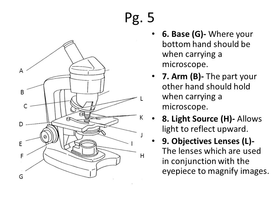 Pg. 5 6. Base (G)- Where your bottom hand should be when carrying a microscope.