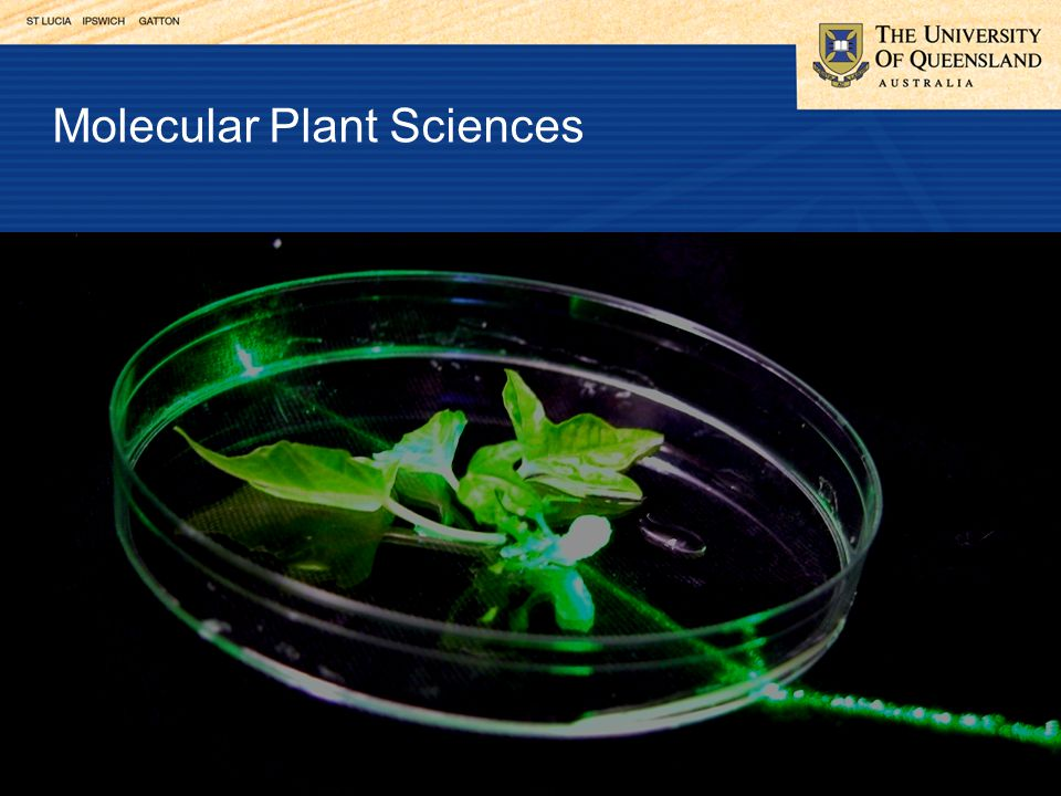 Molecular Plant Sciences