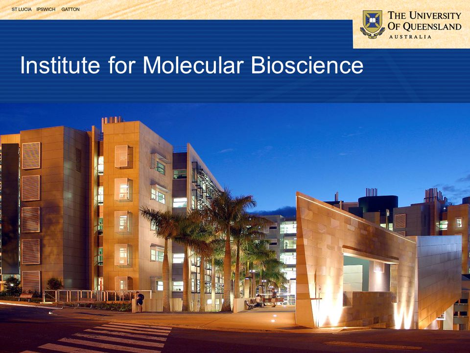 Institute for Molecular Bioscience