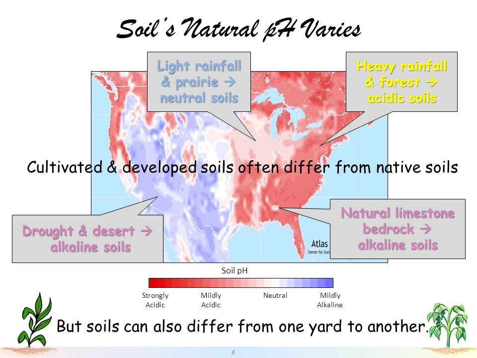 Soil's Natural pH Varies 6 Soil pH Strongly Acidic Mildly Acidic Mildly Alkaline Neutral Heavy rainfall & forest  acidic soils Light rainfall & prairie  neutral soils Drought & desert  alkaline soils alkaline soils Natural limestone bedrock  alkaline soils Cultivated & developed soils often differ from native soils But soils can also differ from one yard to another.