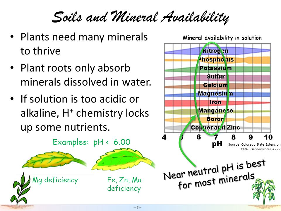 Source: Colorado State Extension CMG, GardenNotes #222 pH Mineral availability in solution Soils and Mineral Availability Plants need many minerals to thrive Plant roots only absorb minerals dissolved in water.