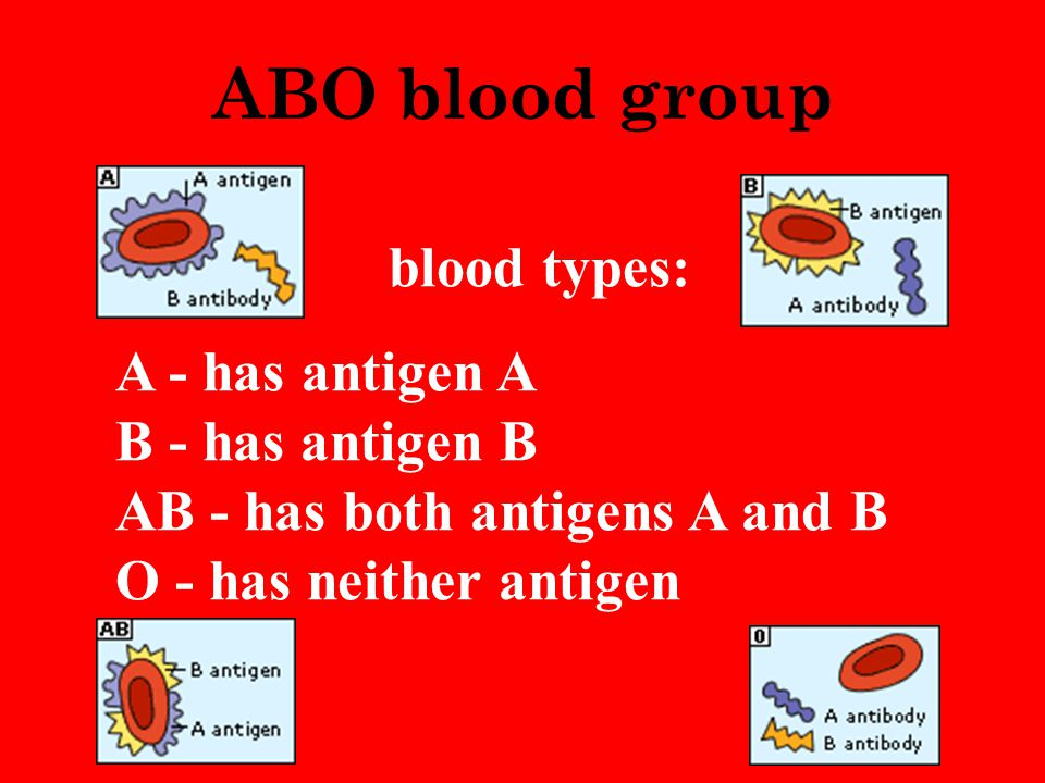 ABO blood group blood types: A - has antigen A B - has antigen B AB - has both antigens A and B O - has neither antigen