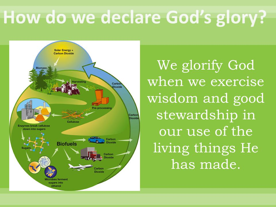 We glorify God when we exercise wisdom and good stewardship in our use of the living things He has made.