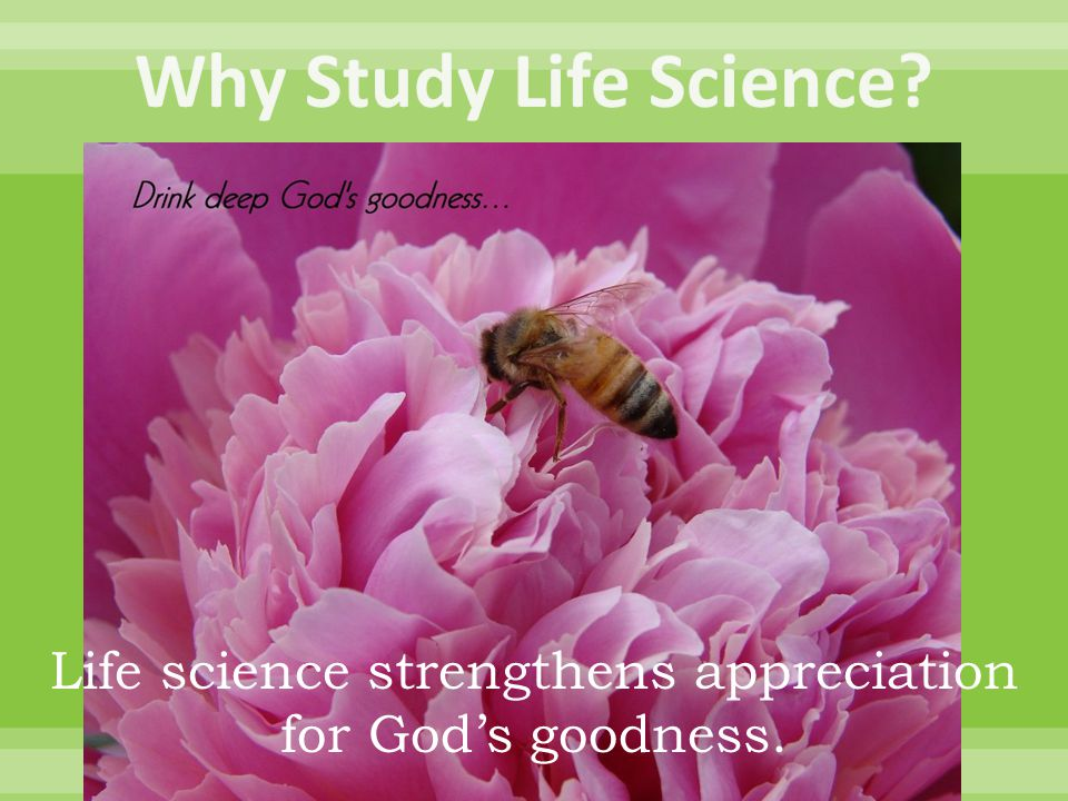 Life science strengthens appreciation for God's goodness.