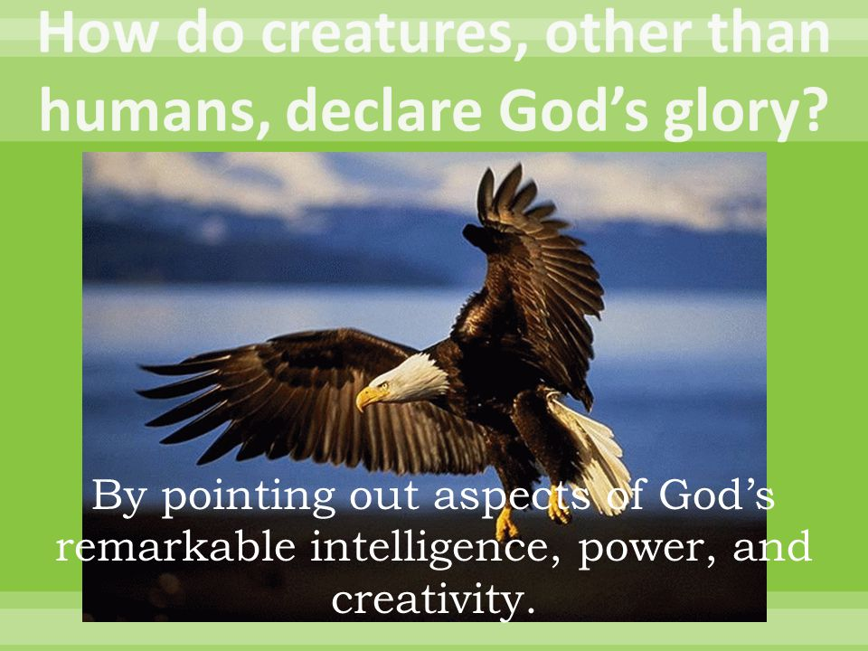 By pointing out aspects of God's remarkable intelligence, power, and creativity.