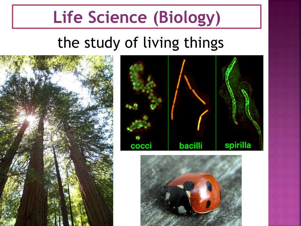 Life Science (Biology) the study of living things