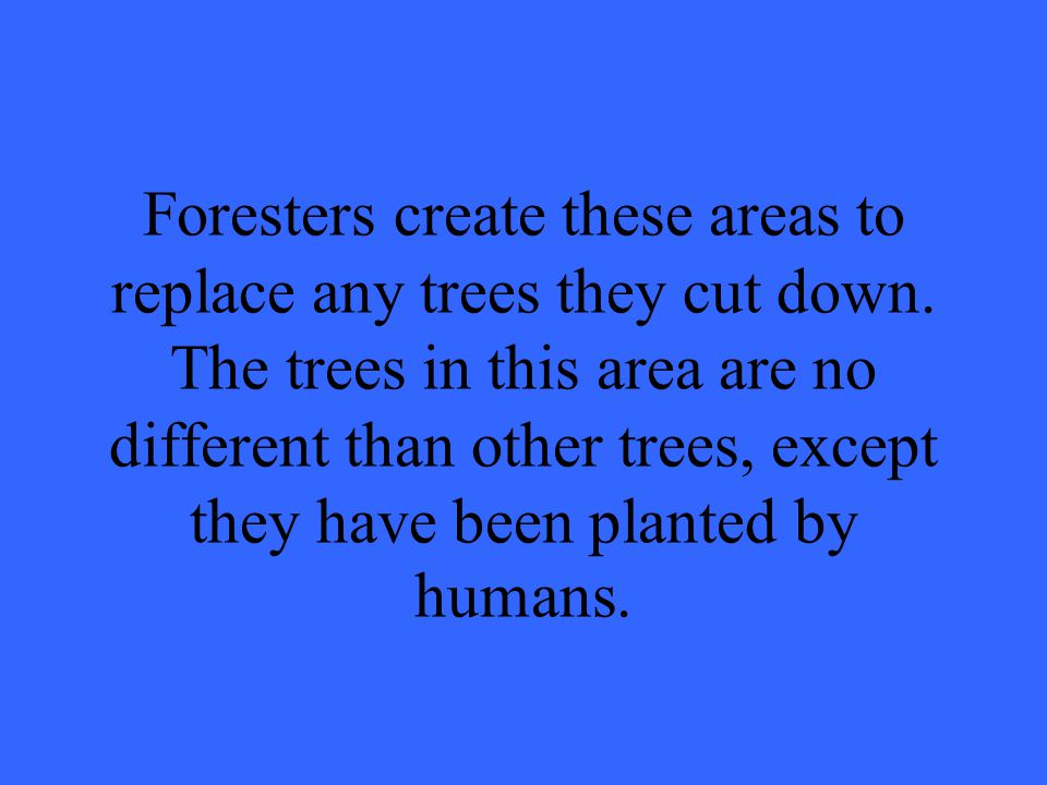 Foresters create these areas to replace any trees they cut down.