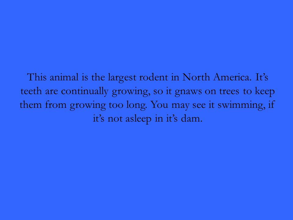 This animal is the largest rodent in North America.