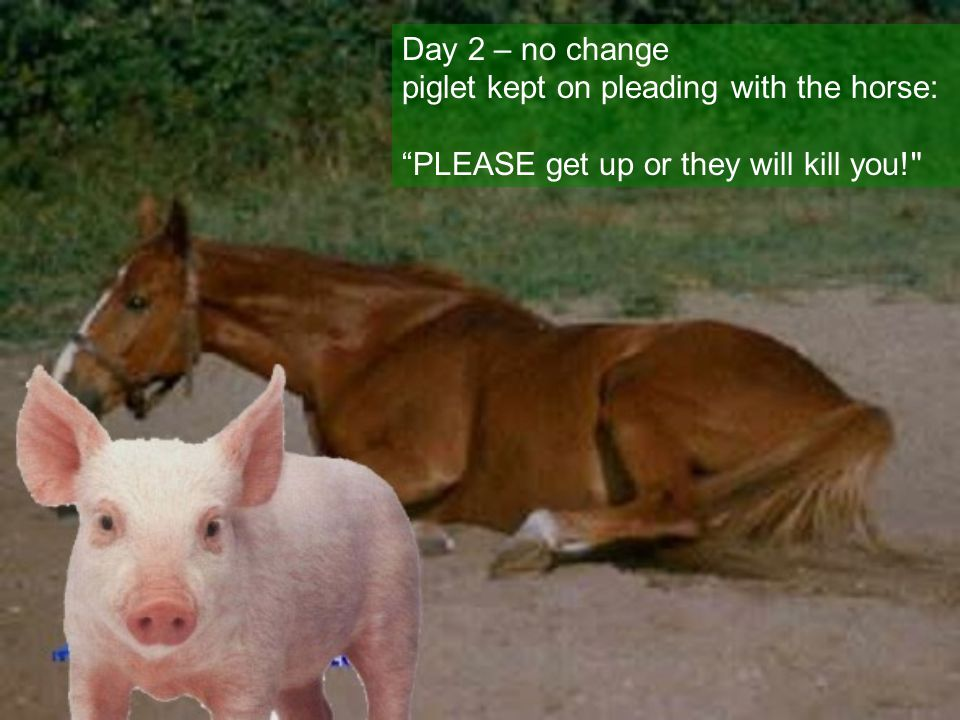 Day 2 – no change piglet kept on pleading with the horse : PLEASE get up or they will kill you!