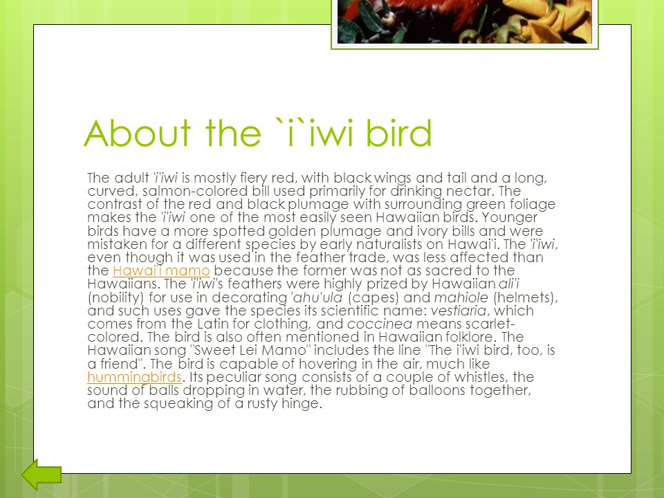 About the `i`iwi bird The adult i iwi is mostly fiery red, with black wings and tail and a long, curved, salmon-colored bill used primarily for drinking nectar.
