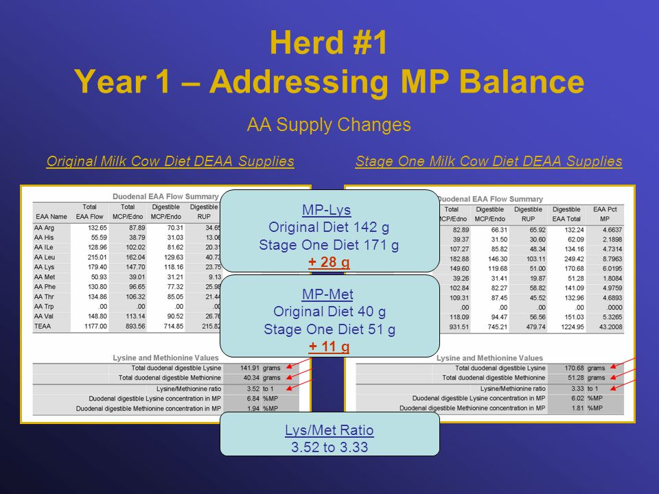 Herd #1 Year 1 – Addressing MP Balance Stage One Milk Cow Diet DEAA SuppliesOriginal Milk Cow Diet DEAA Supplies AA Supply Changes Lys/Met Ratio 3.52 to 3.33 MP-Lys Original Diet 142 g Stage One Diet 171 g + 28 g MP-Met Original Diet 40 g Stage One Diet 51 g + 11 g