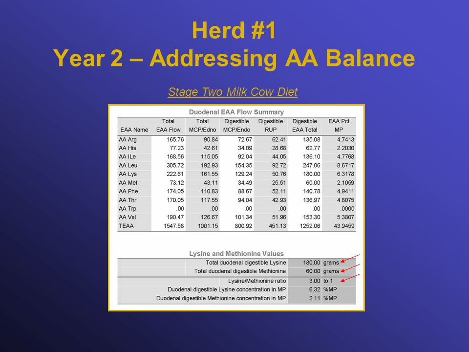 Herd #1 Year 2 – Addressing AA Balance Stage Two Milk Cow Diet