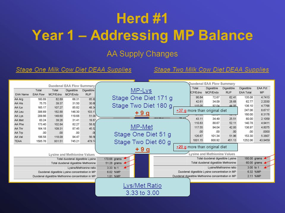 Herd #1 Year 1 – Addressing MP Balance Stage Two Milk Cow Diet DEAA SuppliesStage One Milk Cow Diet DEAA Supplies AA Supply Changes Lys/Met Ratio 3.33 to 3.00 MP-Lys Stage One Diet 171 g Stage Two Diet 180 g + 9 g MP-Met Stage One Diet 51 g Stage Two Diet 60 g + 9 g +37 g more than original diet +20 g more than original diet