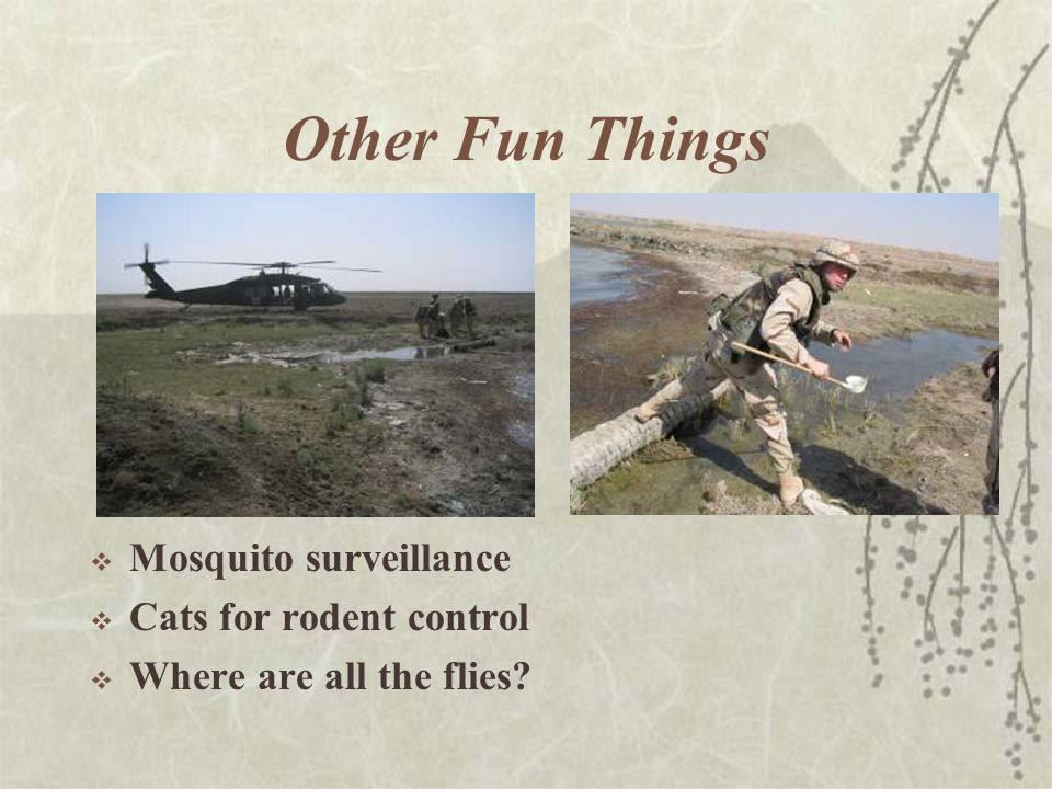Other Fun Things  Mosquito surveillance  Cats for rodent control  Where are all the flies