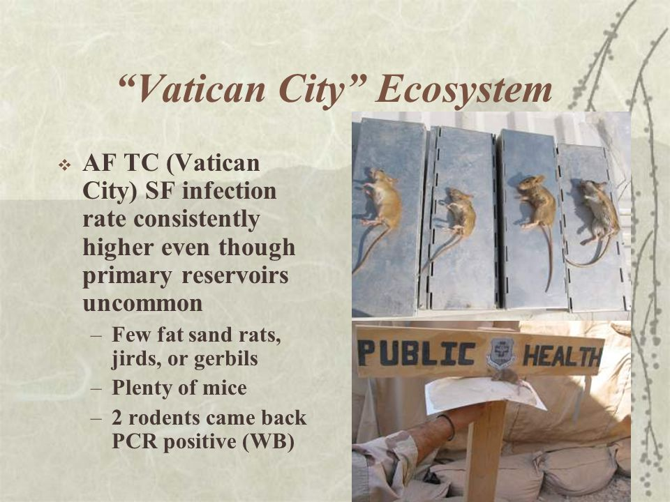 Vatican City Ecosystem  AF TC (Vatican City) SF infection rate consistently higher even though primary reservoirs uncommon –Few fat sand rats, jirds, or gerbils –Plenty of mice –2 rodents came back PCR positive (WB)
