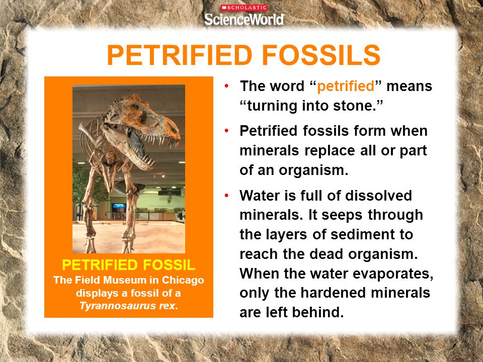 "The word ""petrified"" means ""turning into stone."" Petrified fossils form when minerals replace all or part of an organism. Water is full of dissolved m"