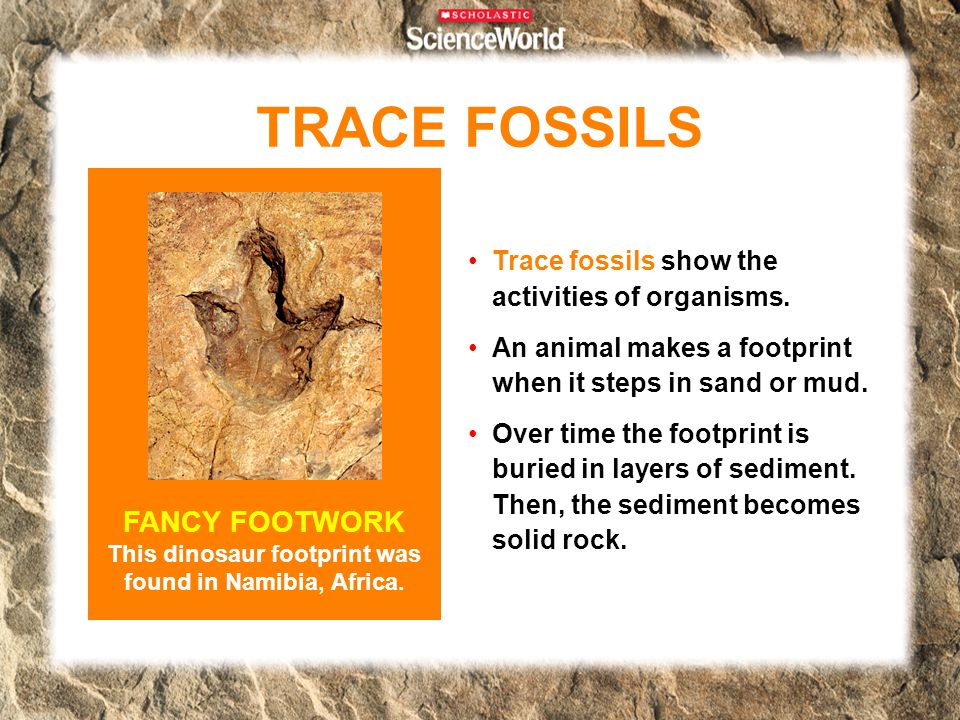 TRACE FOSSILS Trace fossils show the activities of organisms. An animal makes a footprint when it steps in sand or mud. Over time the footprint is bur