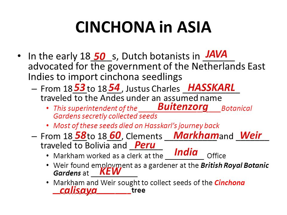 CINCHONA in ASIA In the early 18____s, Dutch botanists in ______ advocated for the government of the Netherlands East Indies to import cinchona seedli
