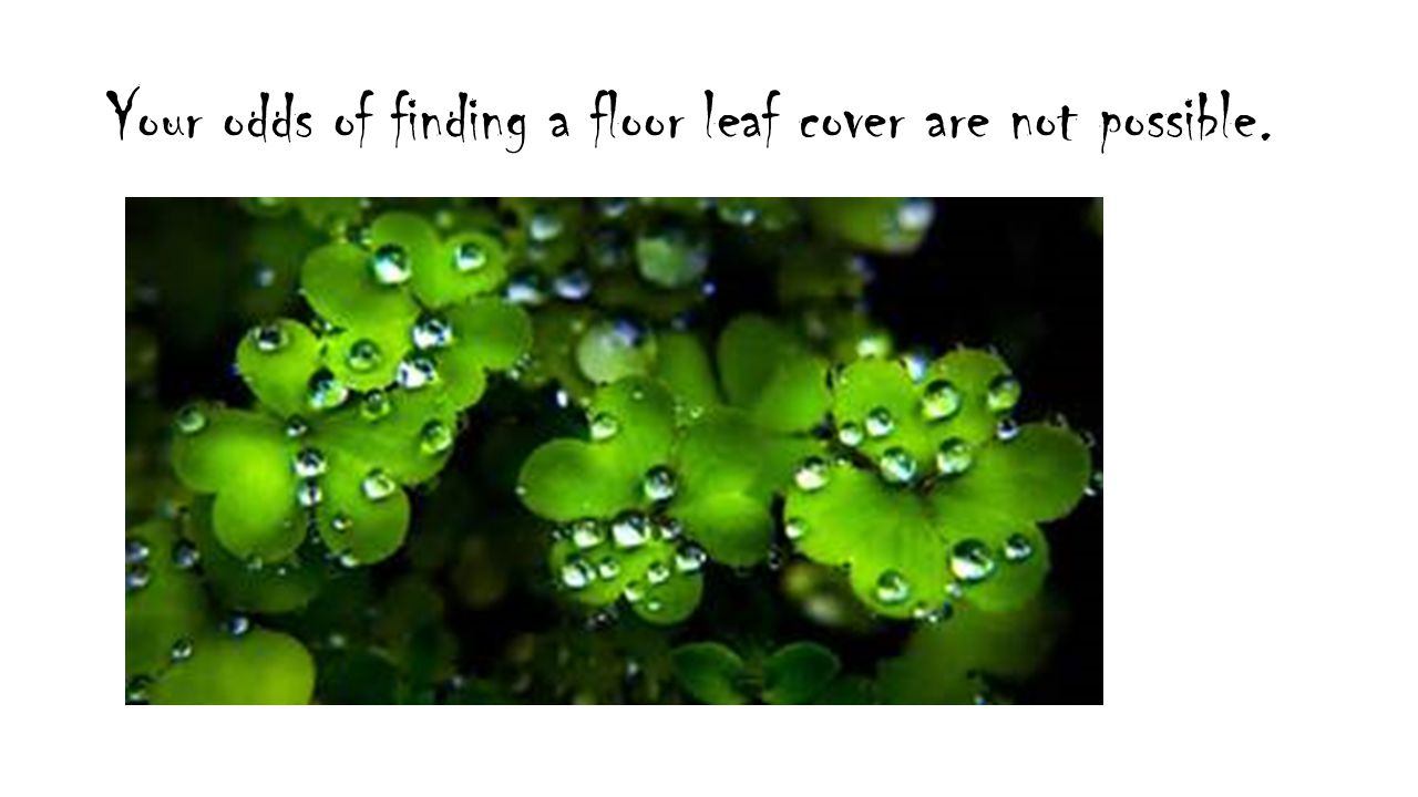 Your odds of finding a floor leaf cover are not possible.