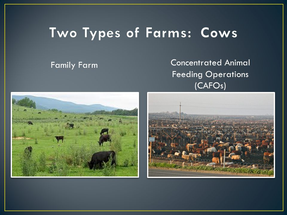 Family Farm Concentrated Animal Feeding Operations (CAFOs)