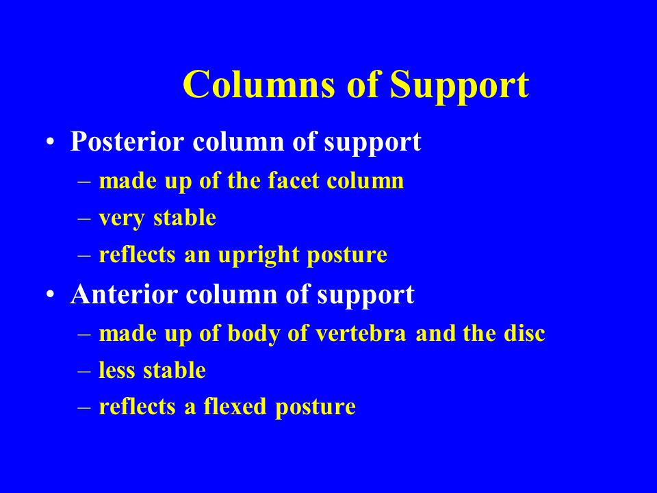 Columns of Support Posterior column of support –made up of the facet column –very stable –reflects an upright posture Anterior column of support –made