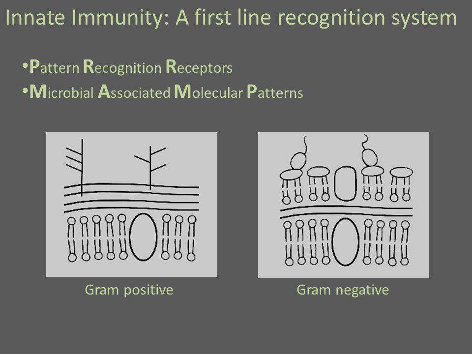 Innate Immunity: A first line recognition system P attern R ecognition R eceptors M icrobial A ssociated M olecular P atterns Gram positiveGram negative