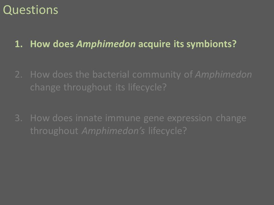 Questions 1.How does Amphimedon acquire its symbionts.