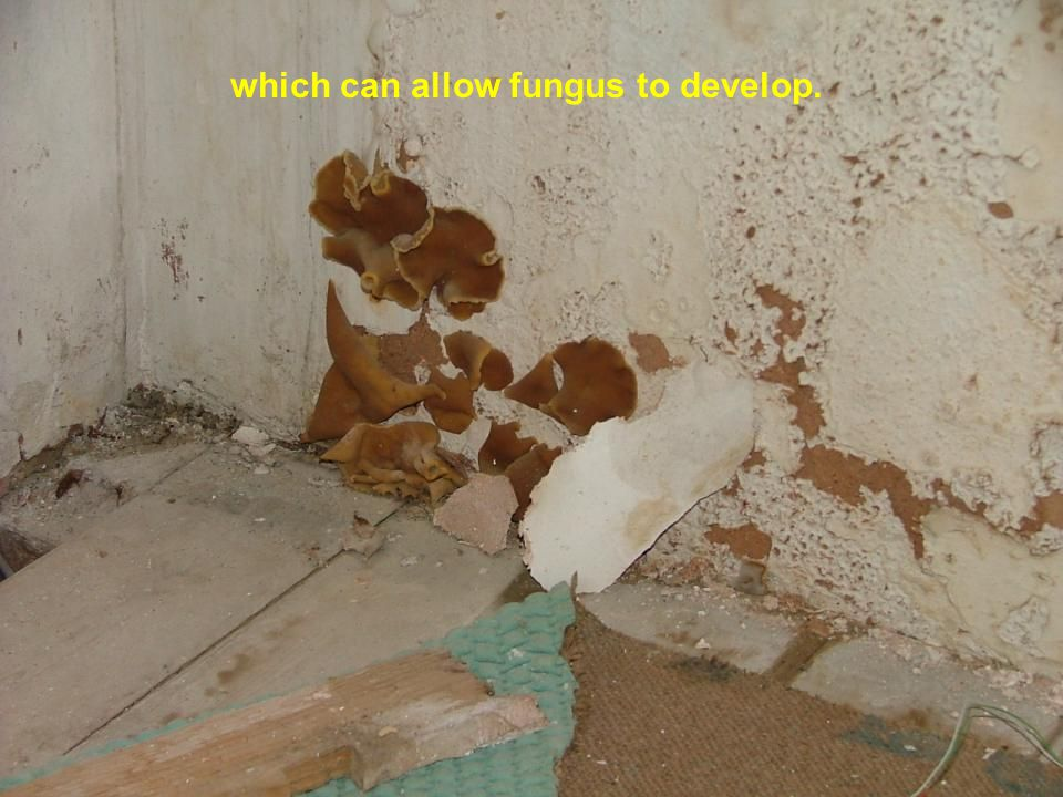 which can allow fungus to develop.