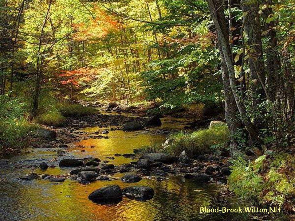 Blood-Brook.Wilton,NH