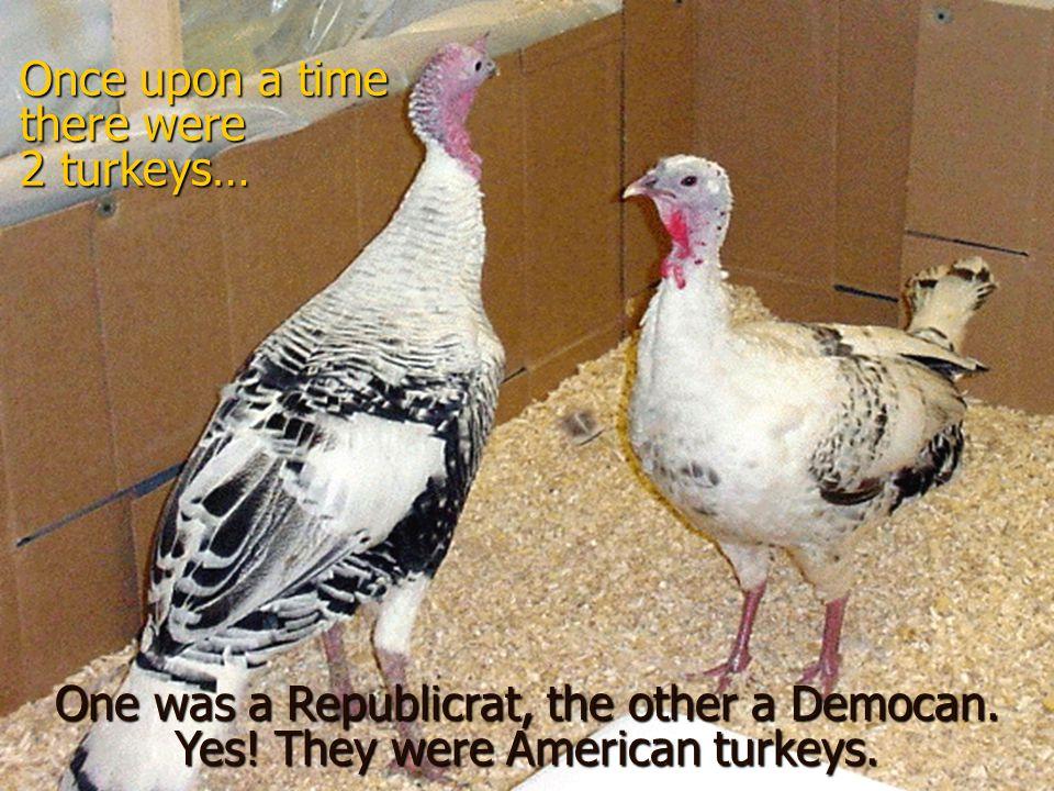 A Tale of Three Turkeys A Tale of Three Turkeys