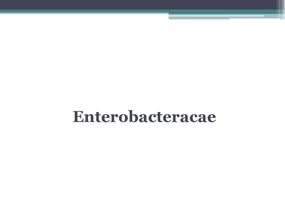 Enterobacteracae